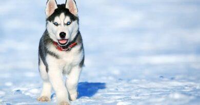 نباح الكلاب ينقذ شخصين من الموت بسويسرا